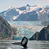 Alaska's Glaciers and the Inside Passage